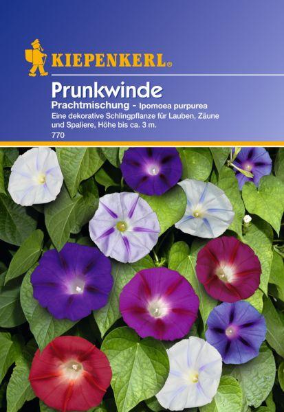 Kiepenkerl Prunkwinde Prachtmischung - Ipomoea purpurea
