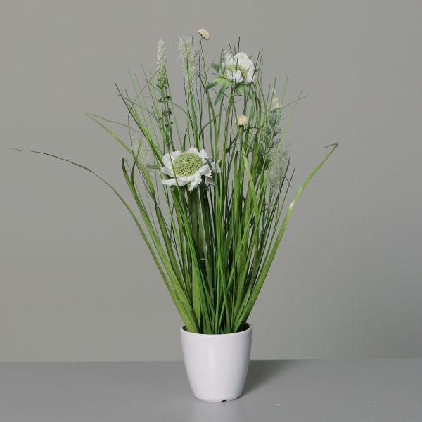 Wiesenblumengras im weißen Kunststofftopf, cream