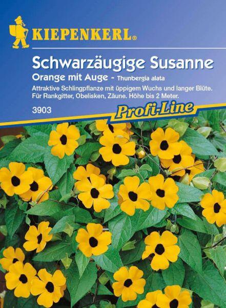 Kiepenkerl Schwarzäugige Susanne Orange mit Auge - Thunbergia alata