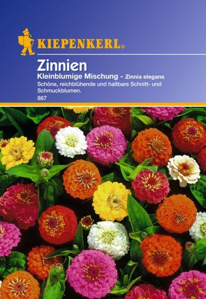 Kiepenkerl Zinnien Kleinblumige Mischung - Zinnia elegans