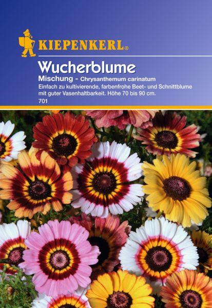 Kiepenkerl Wucherblume Mischung - Chrysanthemum carinatum
