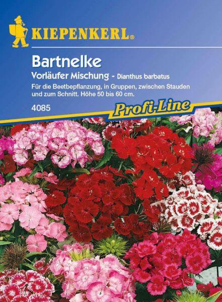 Kiepenkerl Bartnelke Vorläufer Mischung - Dianthus barbatus
