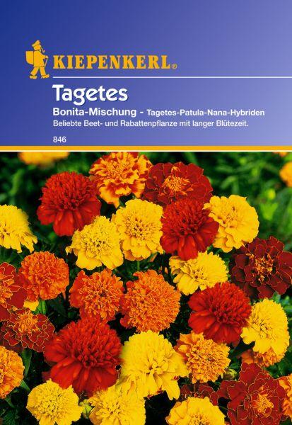 Kiepenkerl Tagetes Bonita-Mischung - Tagetes-Patula-Nana-Hybriden