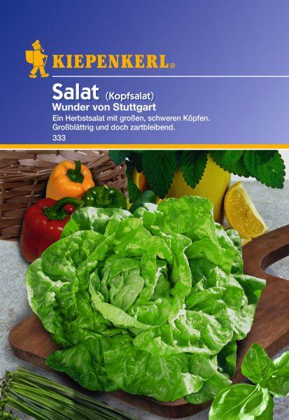 Kiepenkerl Salat (Kopfsalat) Wunder von Stuttgart