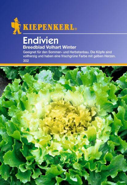 Kiepenkerl Endivien Breedblad Volhart Winter