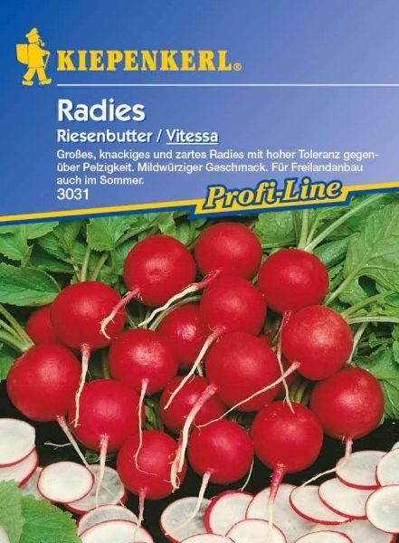 Kiepenkerl Radies Riesenbutter / Vitessa