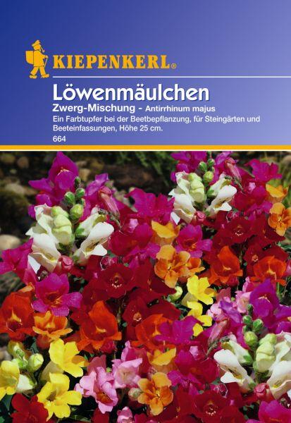 Kiepenkerl Löwenmäulchen Zwerg-Mischung- Antirrhinum majus
