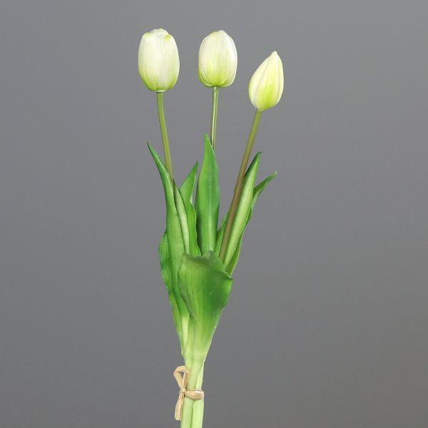 Tulpenbund white-green