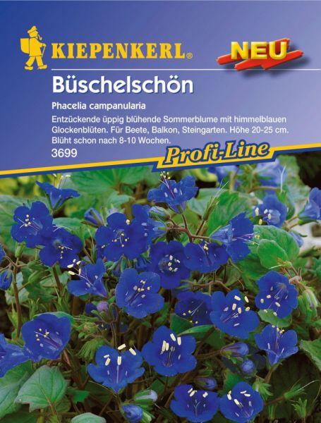 Kiepenkerl Büschelschön Phacelia campanularia
