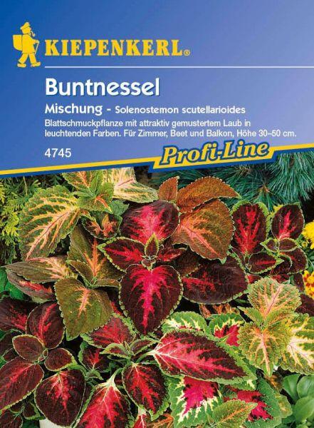 Kiepenkerl Buntnessel Mischung - Solenostemon scutellarioides