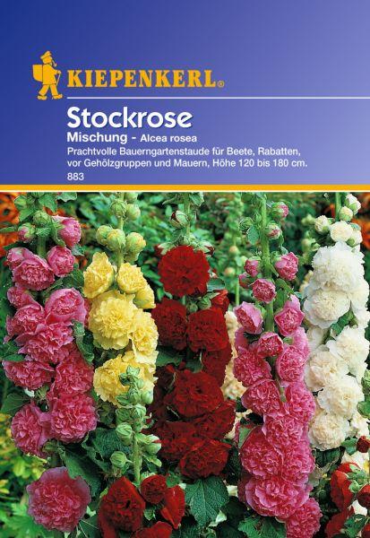 Stockrose Mischung - Alcea rosea