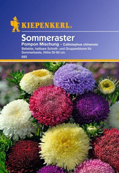 Kiepenkerl Sommeraster Pompon Mischung - Callistephus chinensis