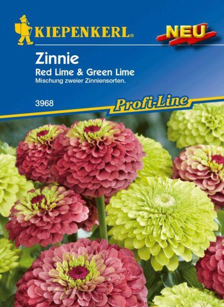 Kiepenkerl Zinnie Red Lime & Green Lime- Zinnia elegans