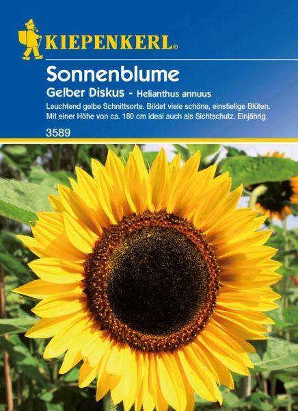 Kiepenkerl Sonnenblume Gelber Diskus - Helianthus annuus