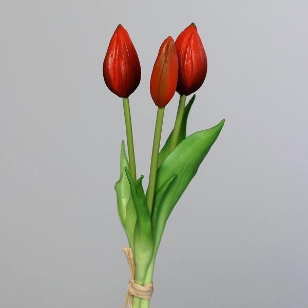 Tulpenbund red