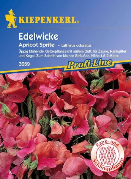 Kiepenkerl Edelwicke Apricot Sprite - Lathyrus odoratus