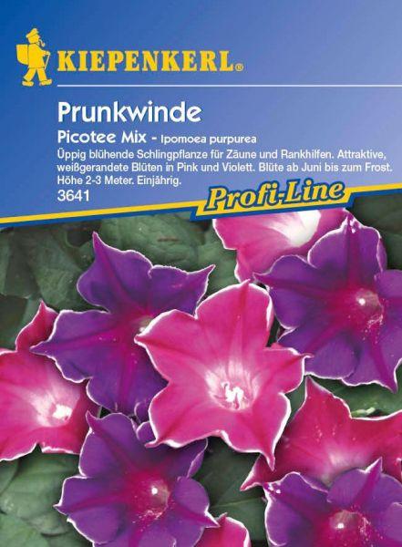 Kiepenkerl Prunkwinde Picotee Mix - Ipomoea purpurea