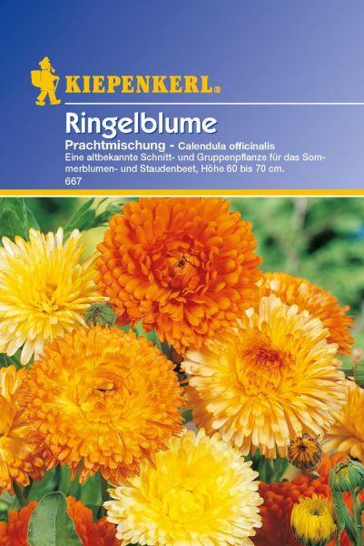 Kiepenkerl Ringelblume Prachtmischung - Calendula officinalis