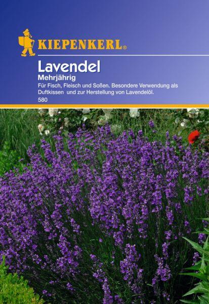 Kiepenkerl Lavendel Mehrjährig