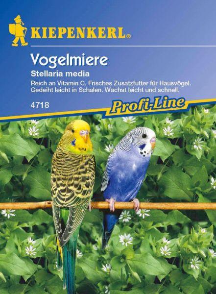 Kiepenkerl Vogelmiere Stellaria media
