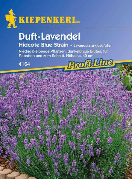 Kiepenkerl Duft-Lavendel