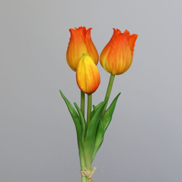 Tulpenbund orange-yellow