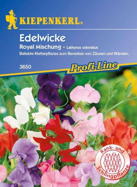 Kiepenkerl Edelwicke - Royal Mischung - Lathyrus odoratus