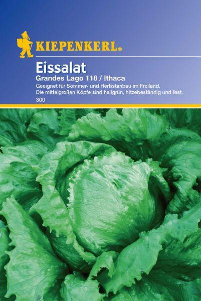 Kiepenkerl Salat (Eissalat) Grandes Lagos 118