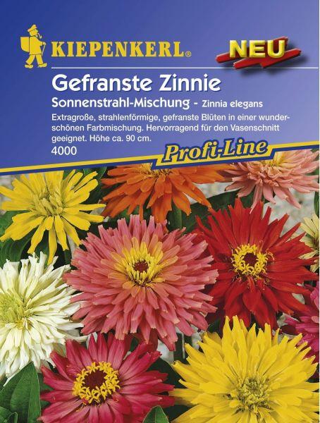 Kiepenkerl Zinnie Sonnenstrahl-Mischung - Zinnia elegans
