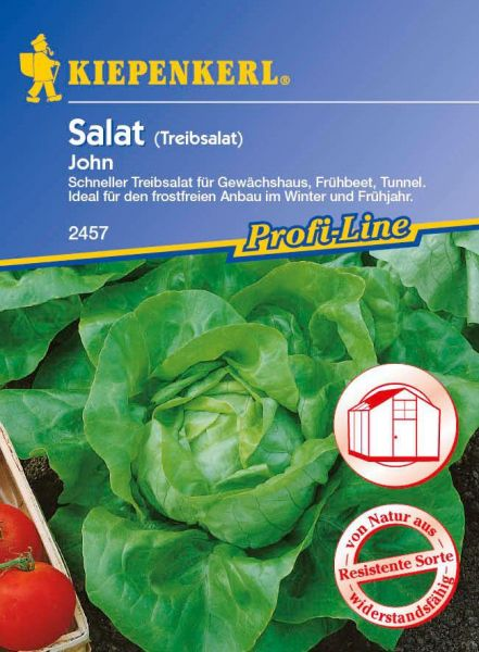 Kiepenkerl Salat (Kopfsalat/Treibsalat) John