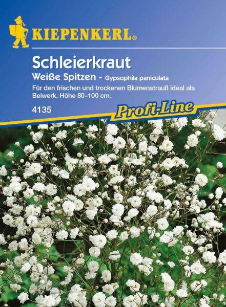 Kiepenkerl Schleierkraut Weiße Spitzen - Gypsophila paniculata