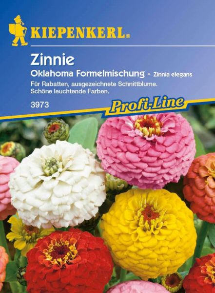 Kiepenkerl Zinnie Oklahoma Formelmischung - Zinnia elegans