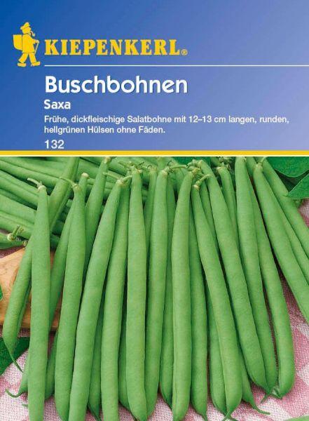 Kiepenkerl Buschbohnen Saxa
