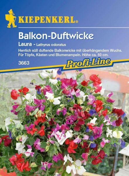 Kiepenkerl Balkon-Duftwicke Laura - Lathyrus odoratus