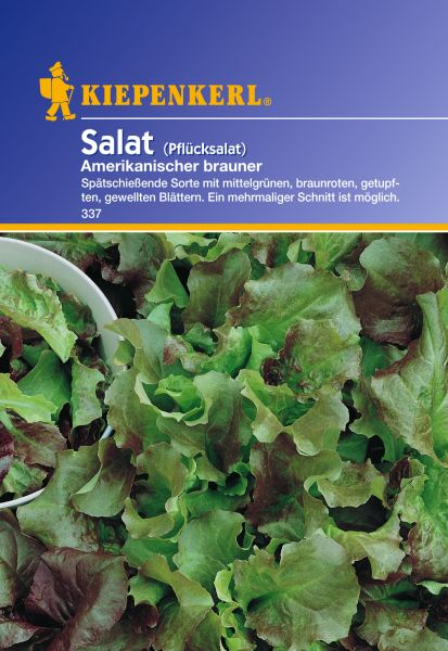 Kiepenkerl Salat (Pflücksalat) Amerikanischer brauner