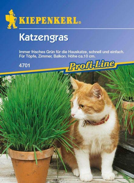 Kiepenkerl Katzengras