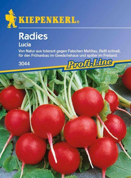 Kiepenkerl Radies Lucia